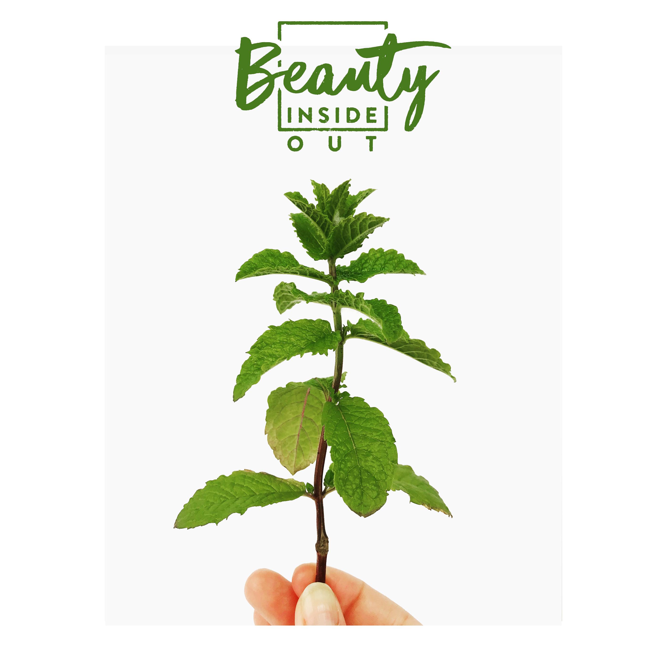 Wirkung von Pfefferminze, Beauty Inside Out: Pfefferminze, Pfefferminze, Wirkung von Pfefferminze auf unseren Körper, Pfefferminzöl, Spannungskopfschmerzen mit Pfefferminzöl behandeln, Beauty, Naturkosmetik, Beauty Tipps, Gesundheitstipp, gesund