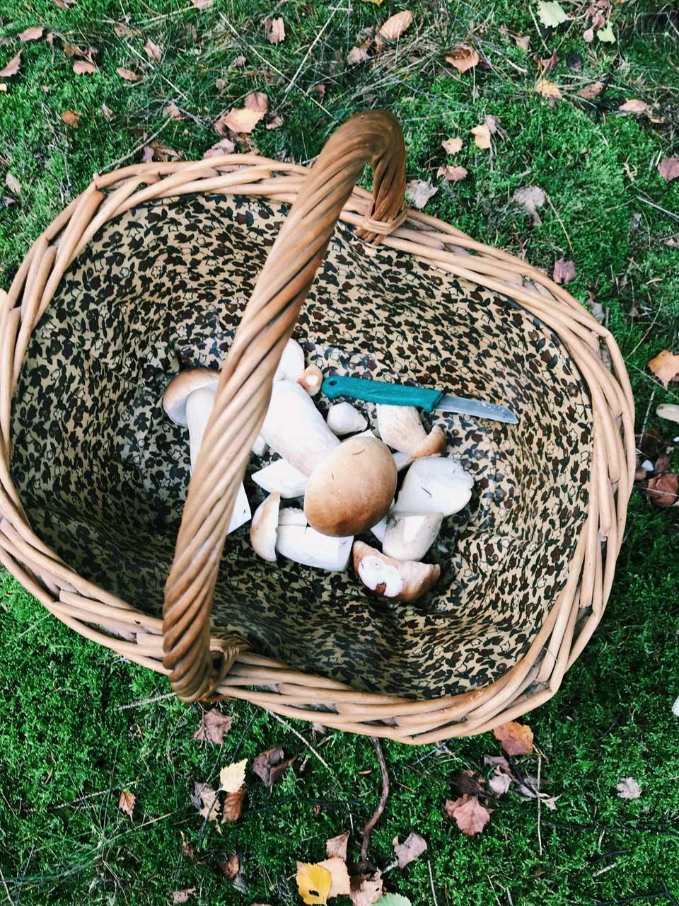 Bucket List für den Herbst, Herbst zelebrieren, Herbst Freude, Ideen für den Herbst, Herbst Ideen, Herbst genießen, Herbst feiern, Kürbis, Halloween, Pilze sammeln, worauf wir uns im Herbst freuen,