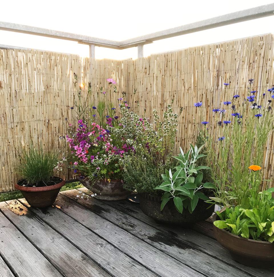 Balkon und Terrasse gestalten, Balkon Ideen, Ideen für Balkon und Terrasse, Dekoration für Balkon, Dekoration für Terrasse, schöner Balkon, Möbel für den Balkon, Balkon aufräumen, Balkon reinigen, Pflanzen für den Balkon, Pflanzen für die Terrasse