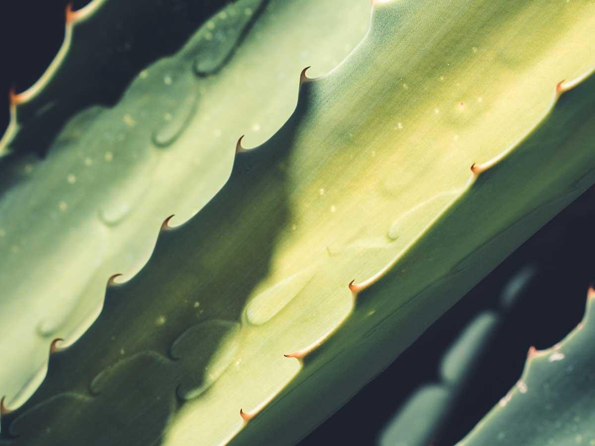 Santaverde, Meine Lieblingsprodukte von Santaverde, Favoriten von Santaverde, Aloe Vera, Naturkosmetik, Hautpflege, Gesichtspflege