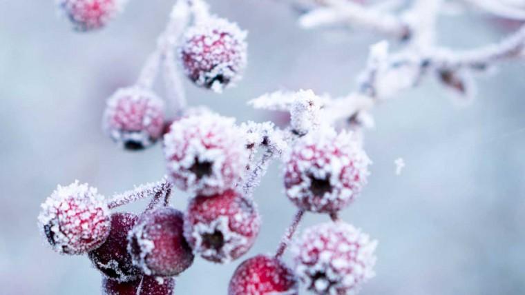5 Tipps gegen den Winter Blues, Winter Blues, Tipps gegen Gemütsverstimmung im Winter, Tageslichtlampe, Vitamin D, Gute Laune auch im Winter,